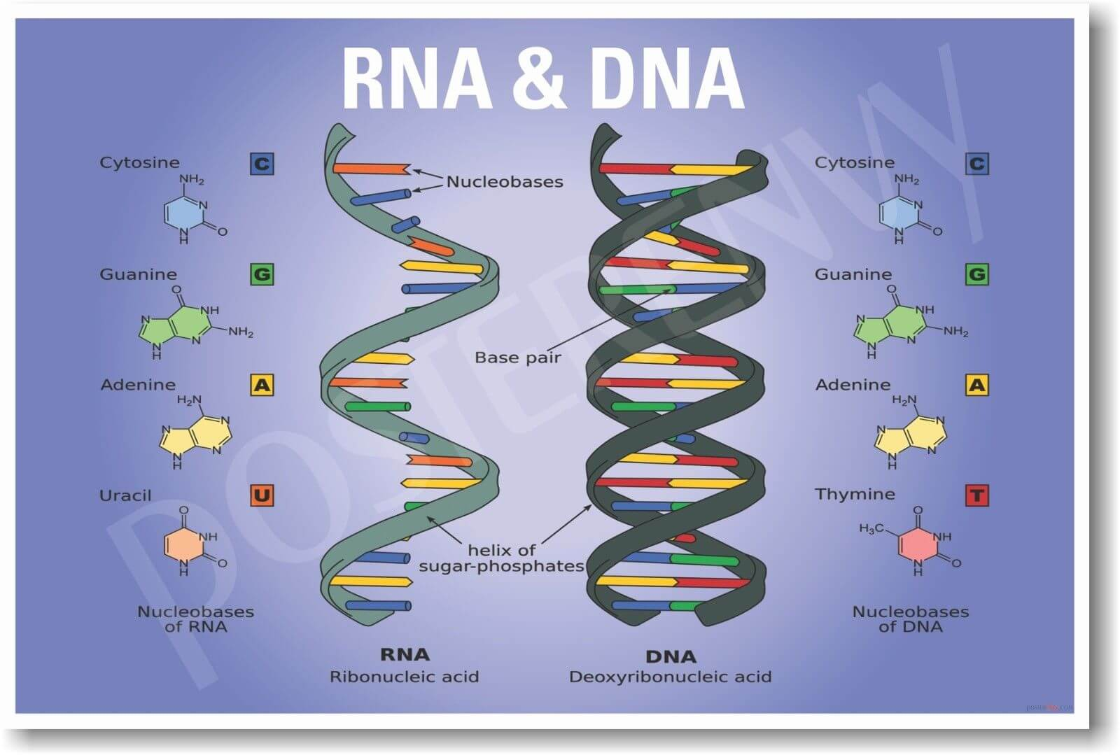 The Key Roles of DNA and RNA and What They Mean